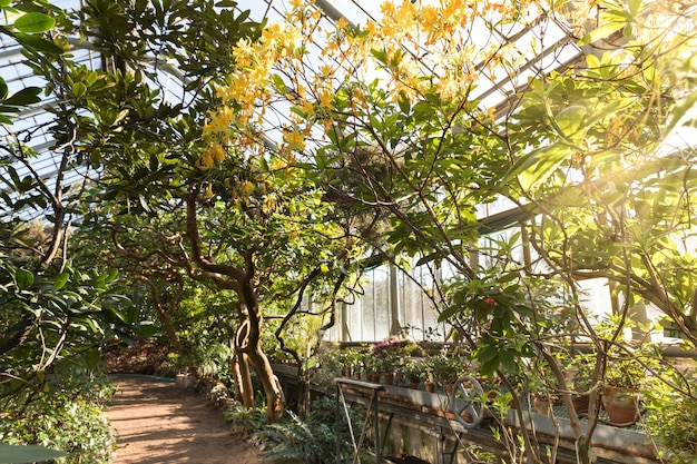 Tropical greenhouse with evergreen flowering plants, twisting trees on sunny day with beautiful light and sun rays.exotic tropical evergreen plants in botanical garden