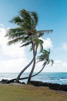 Tropical hawaii landscape with the blue sea