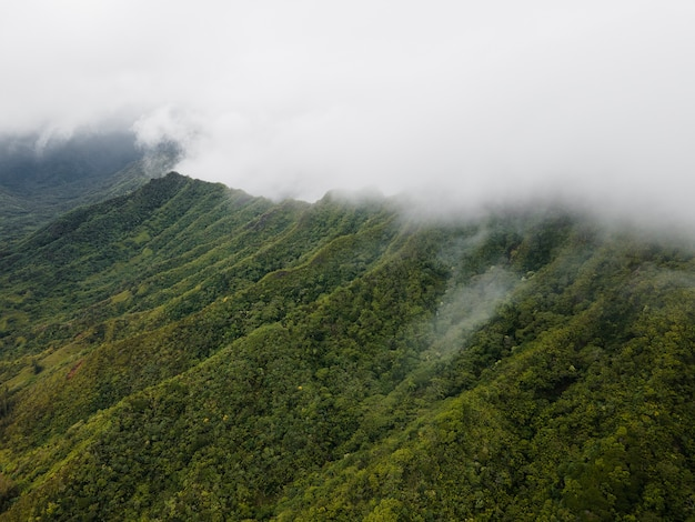 Tropical hawaii landscape with mountain view