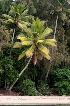 야자수가 있는 열대 하와이 풍경