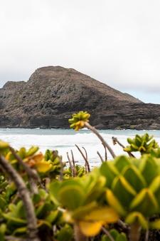 Тропический пейзаж гавайи с синим морем
