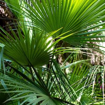 熱帯の草本と植物