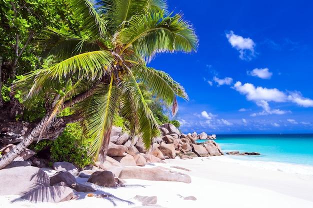 プララン島セイシェルの白い砂浜での熱帯の休日