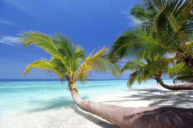 Тропический остров пальмы море и небо