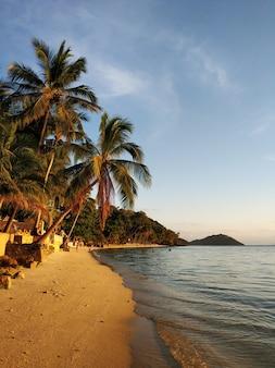 熱帯の島、夕焼け空を背景に手のひら。