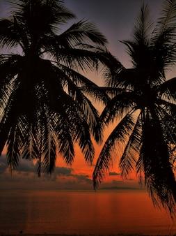 熱帯の島、夕焼け空を背景に手のひら