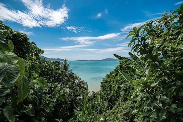 前景とビーチ、プーケット、タイの緑の木々と熱帯の島。