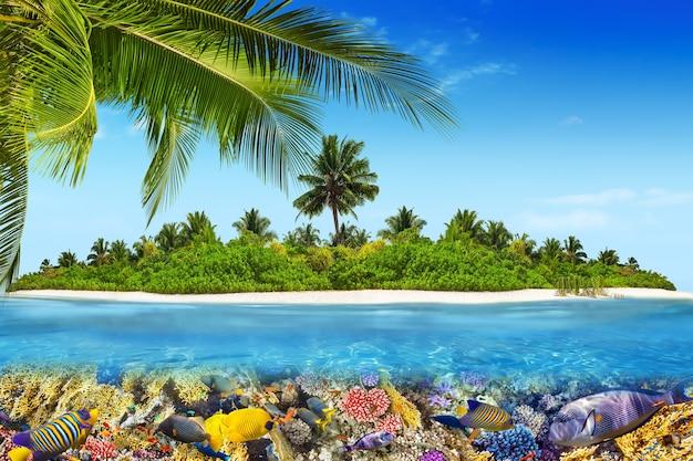 熱帯海の環礁内にある熱帯の島と、サンゴや熱帯魚が生息する素晴らしく美しい水中世界。