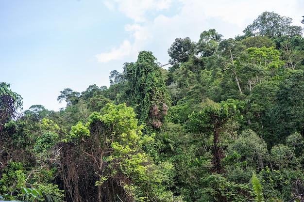열대 정글 섬 코 사무이 녹색 식물 많은 나무