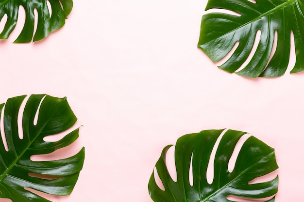 오렌지에 열 대 정글 잎 프레임