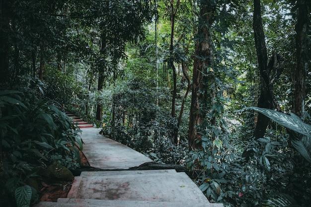 Tropical jungle park. vintage color effect