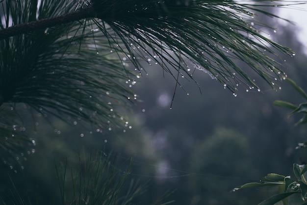 熱帯のジャングルの熱帯雨林、葉、野生、雨のエキゾチックな荒野の風景緑豊かな霧のヤシの植生、成長の光と熱帯雨林の生態熱帯、風光明媚な緑の壁紙
