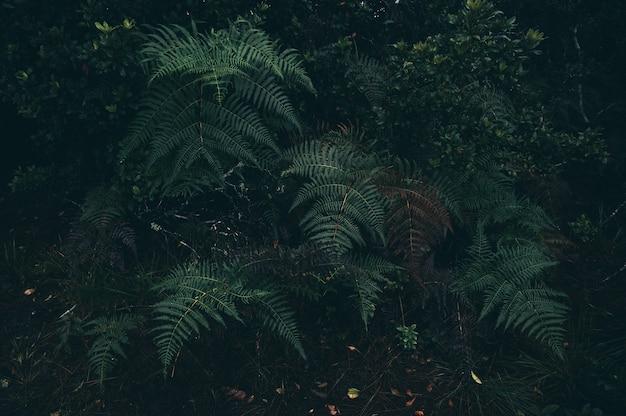 Тропические джунгли, тропические леса, листва, дикие, дождь, экзотические пейзажи дикой природы, пальмовая растительность с пышностью и туманом, экологические тропики в тропических лесах со светом роста, живописные зеленые насаждения обои