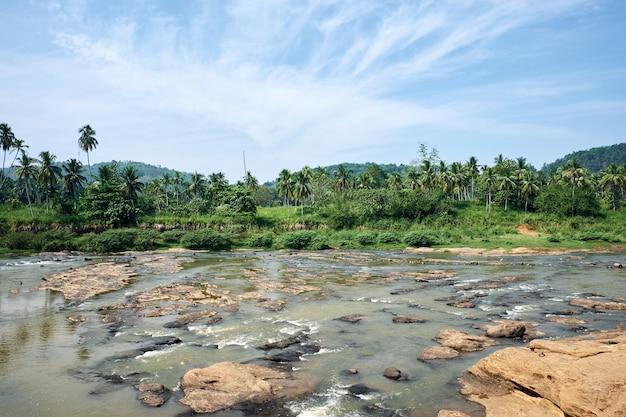 晴れた日にピンナワラの熱帯のジャングル川