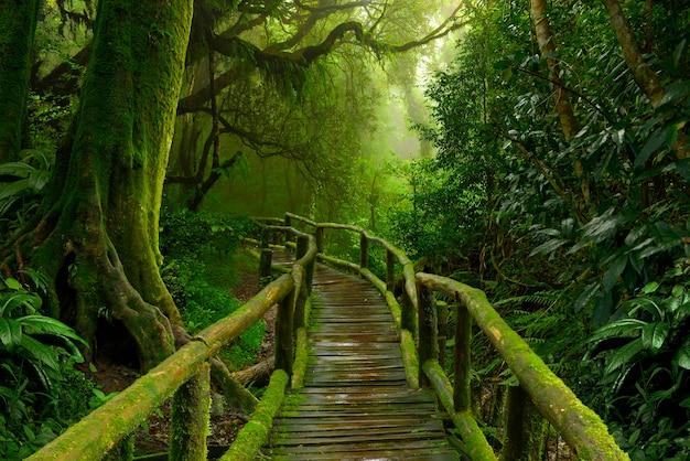 熱帯のジャングル