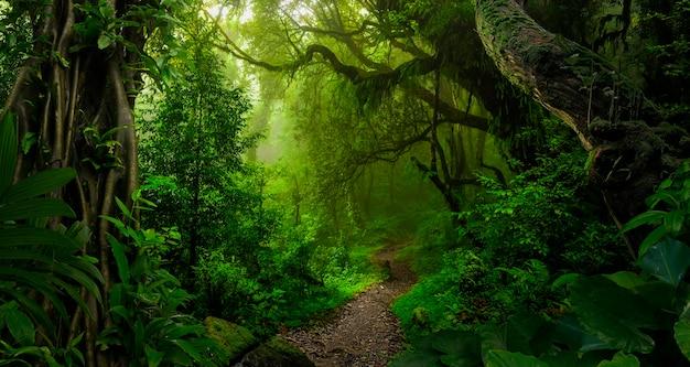 8 월 동남아시아 열대 정글