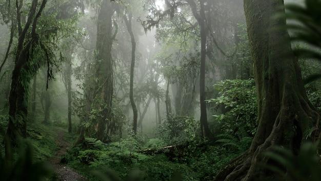 동남아시아의 열대 정글