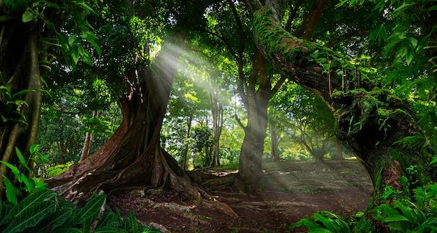 Тропические джунгли юго-восточной азии
