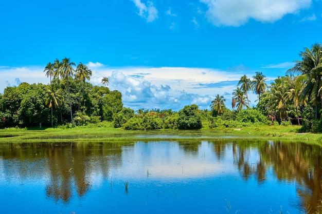 熱帯の風景。山、手のひら、青い空。純粋な自然。鏡の反射がある湖