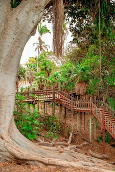 サンディエゴのバルボアパークにある巨大なルーツを持つイチジクの木のある熱帯の風景