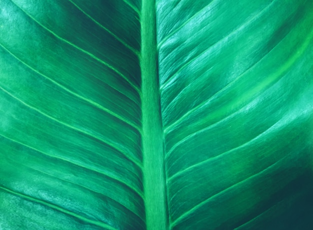Tropical leaf dark green foliage texture the nature background