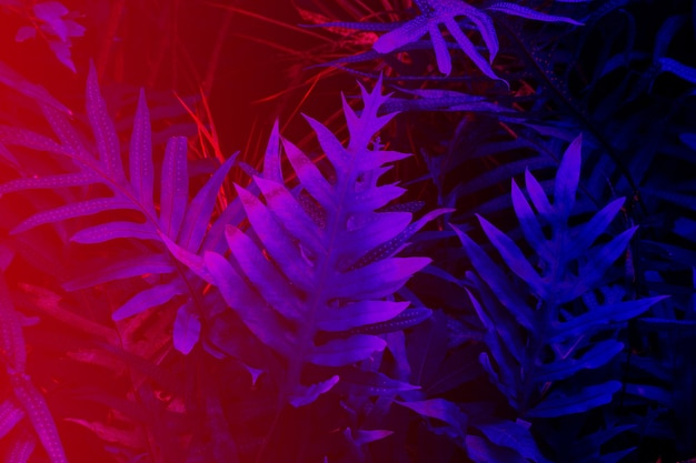 Tropical leaf forest glow in the black light background high contrast
