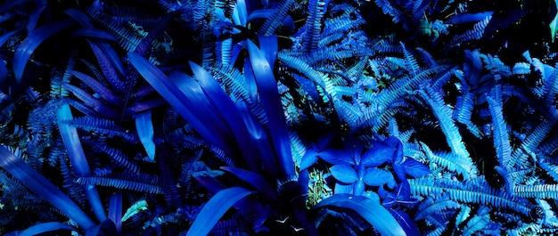 Свечение тропических листьев леса на темном фоне.