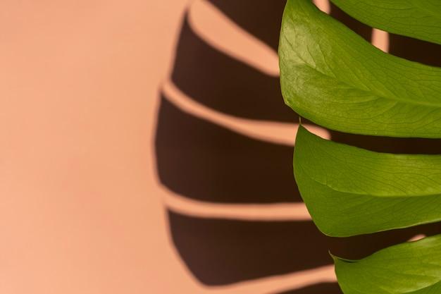 밝은 분홍색 벽에 열 대 잎 monstera입니다. 최소한의 여름 열대