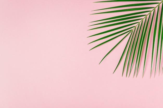 Тропический лист на пастельном фоне минималистской концепции