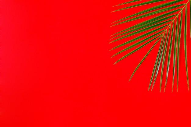 Тропический лист на пастельном фоне