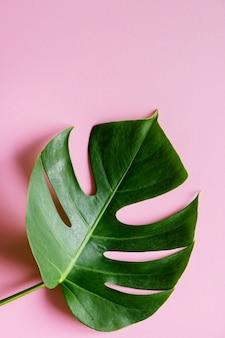 Tropical leaf on pink background