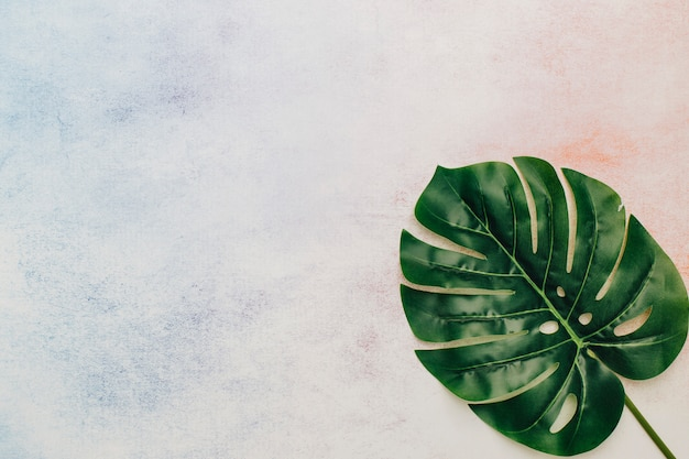 Tropical leaf with copy space in watercolor background