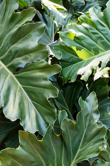 Tropical leafage and plants
