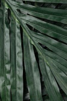 Tropical leave closeup