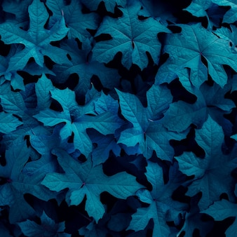 熱帯の葉抽象的な緑の葉テクスチャ自然背景