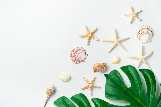 白い壁に熱帯の葉とさまざまな種類の貝殻やヒトデ。コピースペースのあるシーデスク。