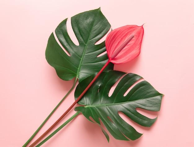 アンスリウムの熱帯の葉と赤い花。