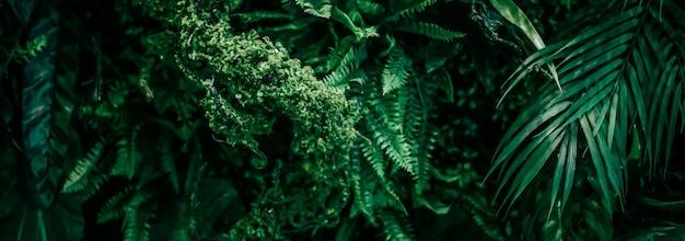 自然と環境の背景植物園と花の背景植物としての熱帯の葉...