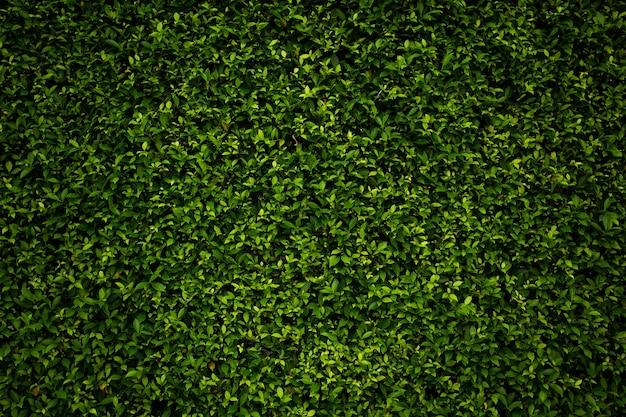 熱帯の葉の背景濃い緑の自然の葉抽象的な自然の背景