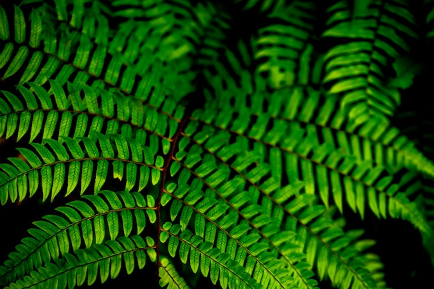 Tropical leaves background, green background pattern.