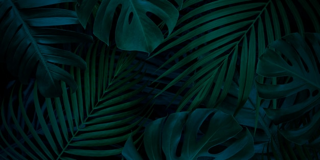 Tropical leaves background with copy space