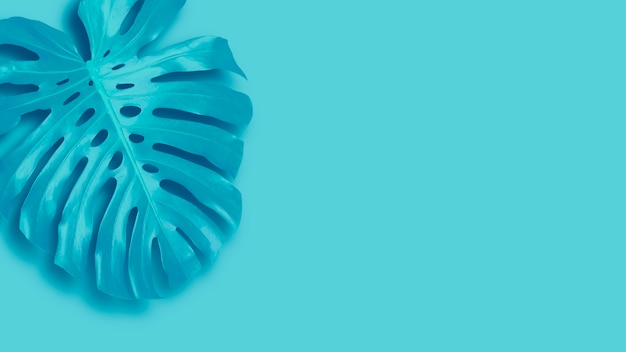 Tropical leaves banner on blue background with copy space