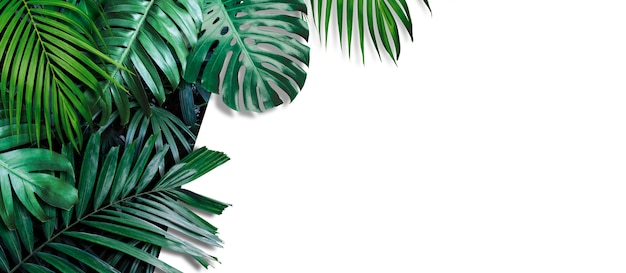 Tropical leaves banner on white