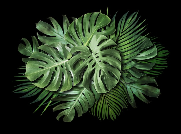 Tropical leaves on black background with copy space