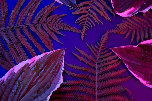 Tropical leaves on a black light background
