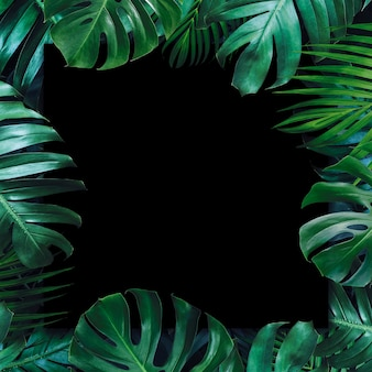 Tropical leaves and blank paper black background