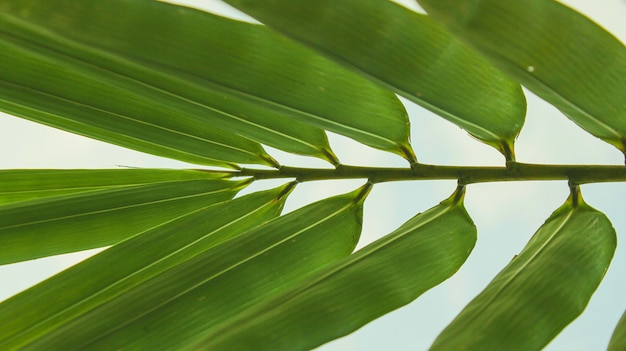 The tropical leaves close-up