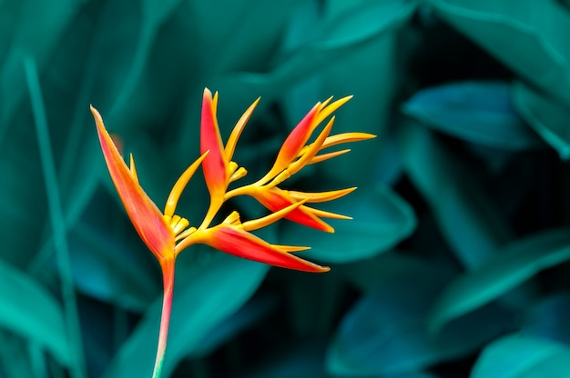 Tropical leaves colorful flower on dark tropical foliage nature background dark green foliage