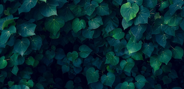 열 대 잎 어두운 열 대 단풍 자연 배경에 화려한 꽃