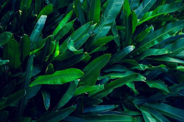 熱帯は暗い熱帯の葉の自然の背景にカラフルな花を残します濃い緑の葉の自然